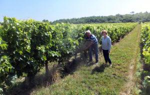 M. et Mme Arrivé dans les vignes du Domaine Elisabeth